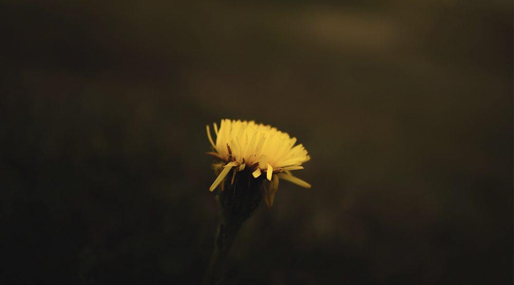 hacer-fotos-a-flores